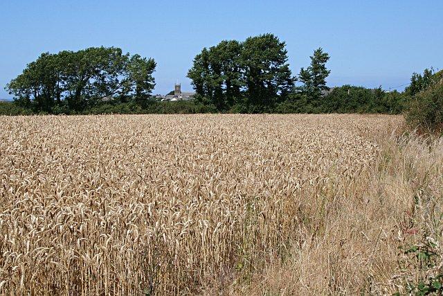 Wheat Field outside Trenance