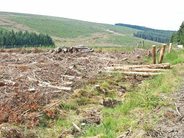 Kielder Forest, looking over the valley of the Neate Burn