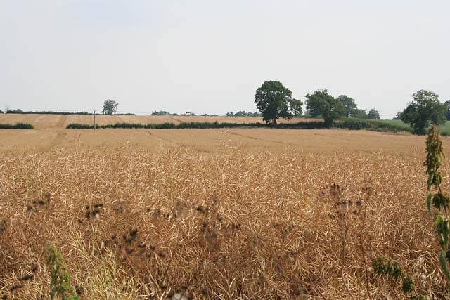 Farmland between Fleckney and Kilby