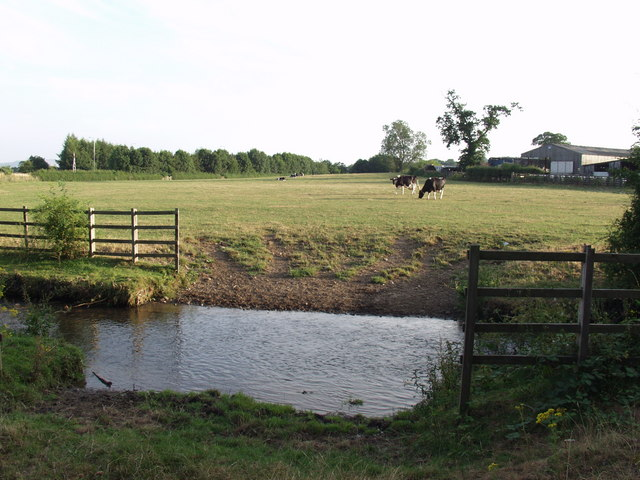 Cows grazing beyond the ford