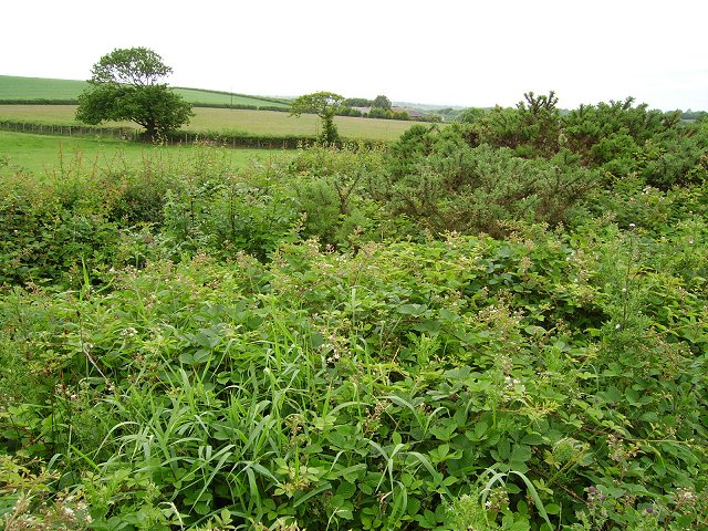 A brambly hedgerow