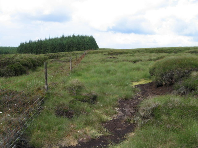 Forest boundary near Peddinnan Burn