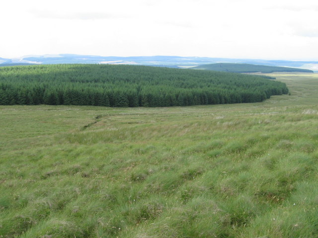 Forest below Enoch Hill