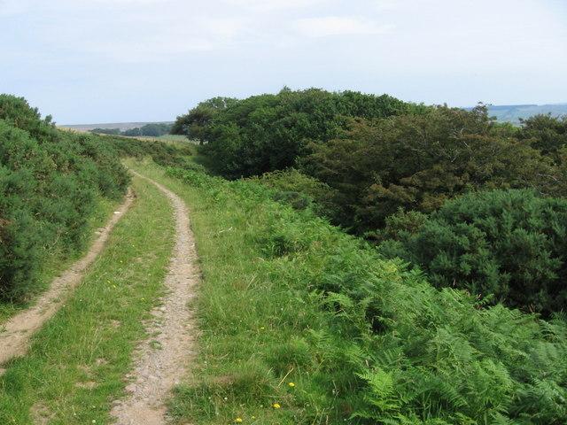 Farm track above Dalleagles Burn