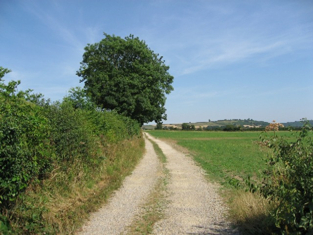 A Footpath To Terrington