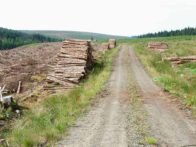 Kielder Forest, near Willowbog