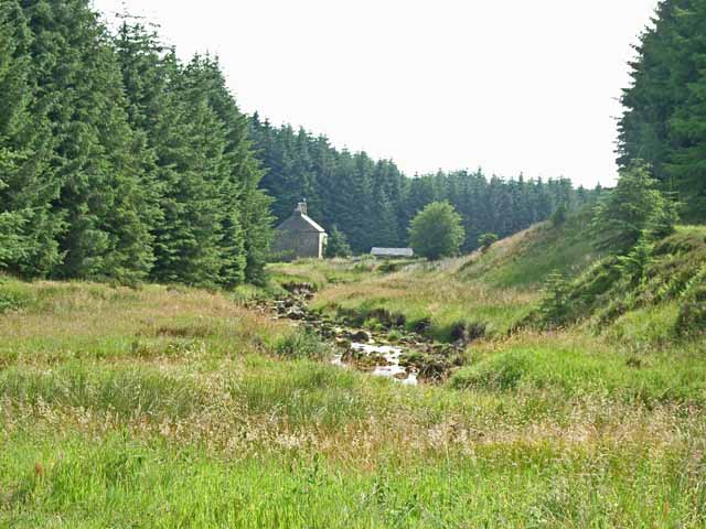 Willowbog, Kielder Forest