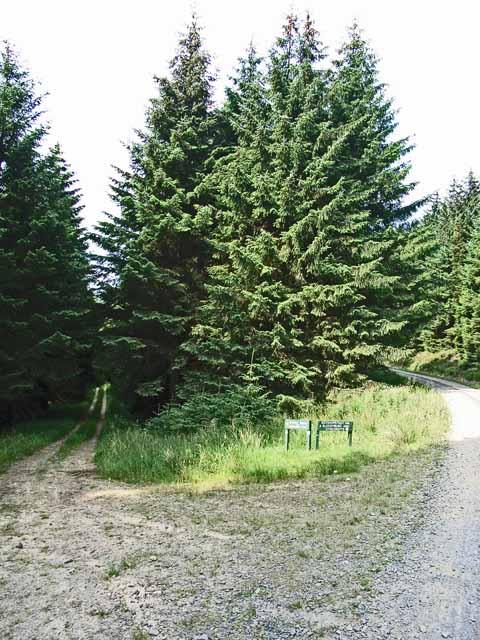 Parting of the ways, Kielder Forest