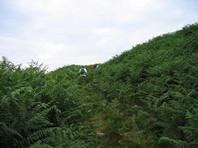 Footpath through bracken  above the Stanhope Burn