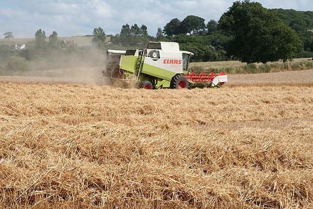 North Tawton: harvesting near Newland Mill