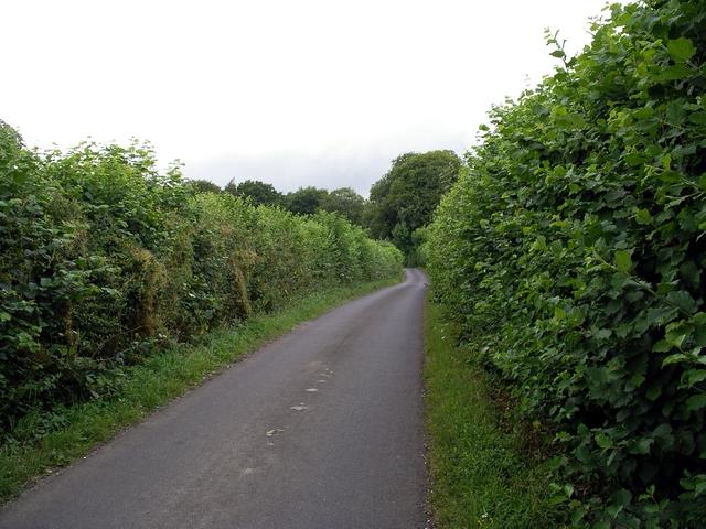 Farleigh Lane, east of Dummer