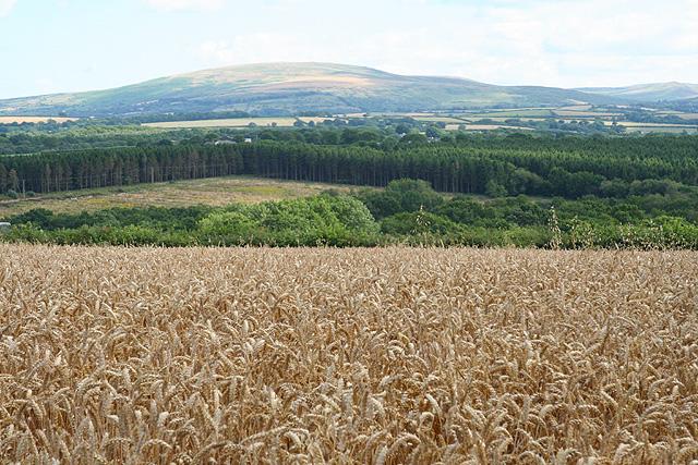 Sampford Courtenay: towards Dartmoor