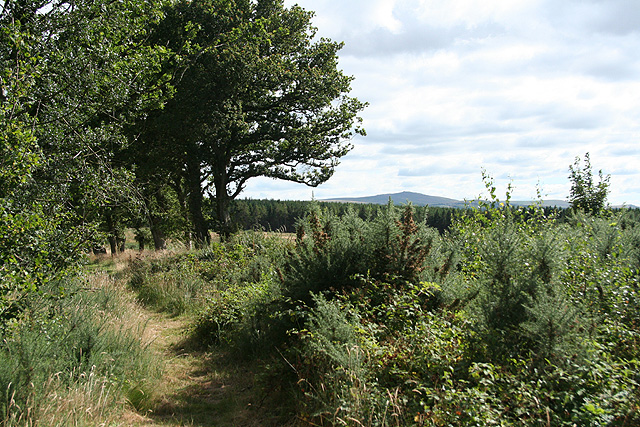 Sampford Courtenay: on Chapple Moor