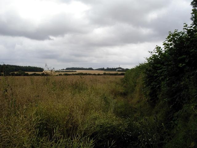 Field of rape seed awaits harvest