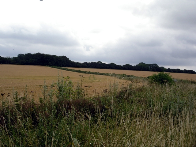 Fields and trees south of the M3