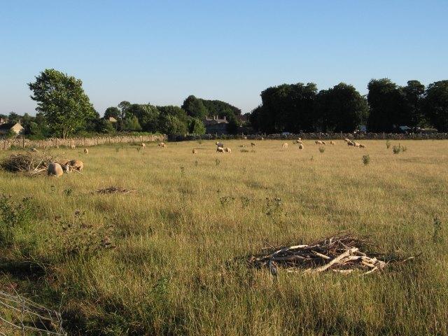 Field with sheep near Winsley