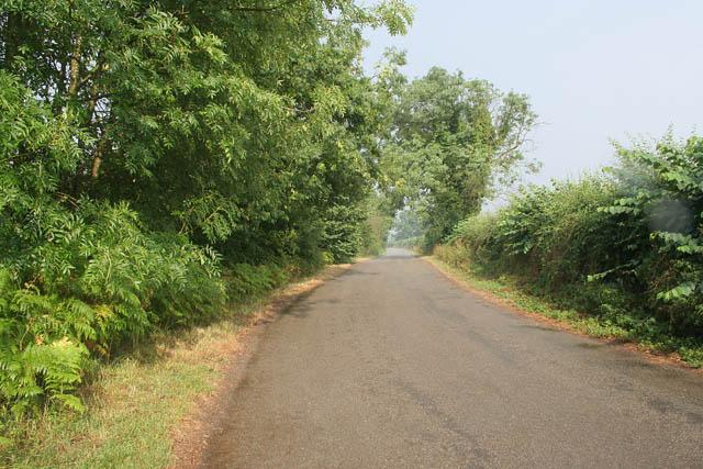 Pilton Lane near Wing