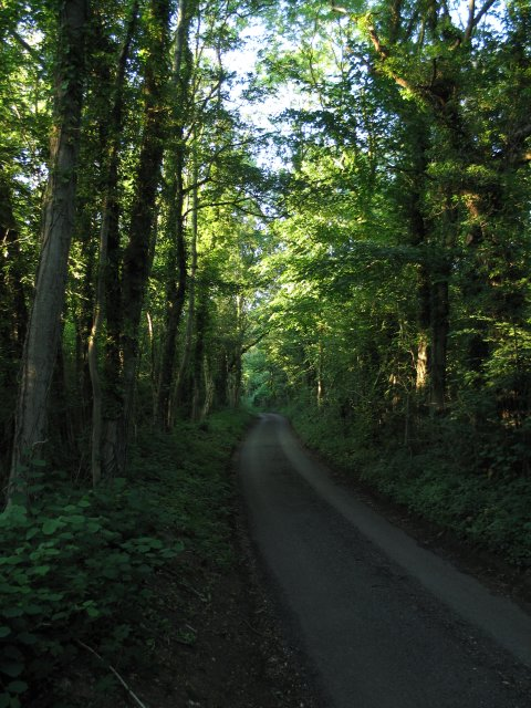 Road through Warleigh Wood