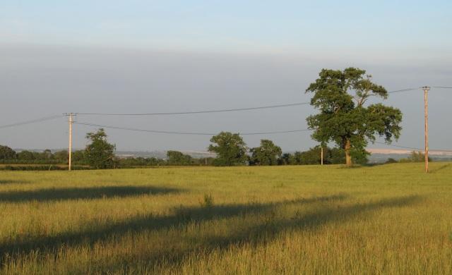 Field near Little Ashley