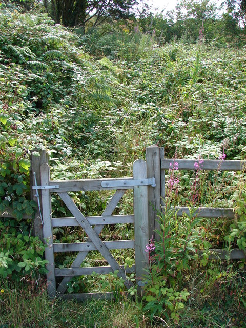 Gate and overgrown path beside the A487