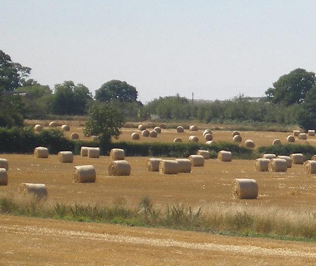 Woodhouse Farm, Catherine de Barnes