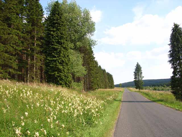 Tall trees on the road to Kielder