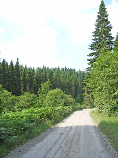 Forest road to Lewisburn picnic site, Kielder Forest