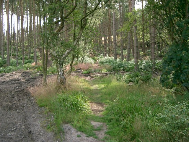 Carnock Moor Forest