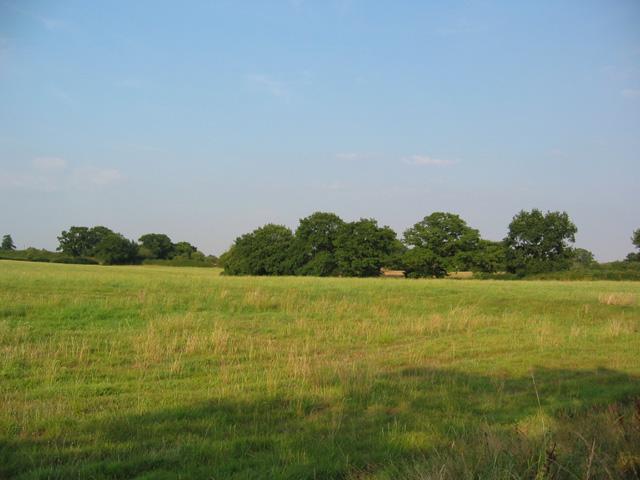 Pasture at Chorley Bank