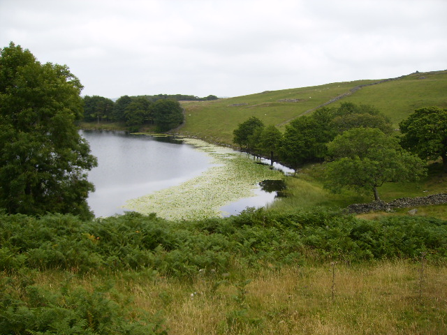 Lily pads on Bigland Tarn
