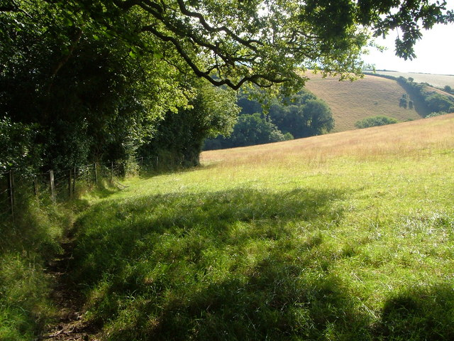 Edge of small wood near Ritson