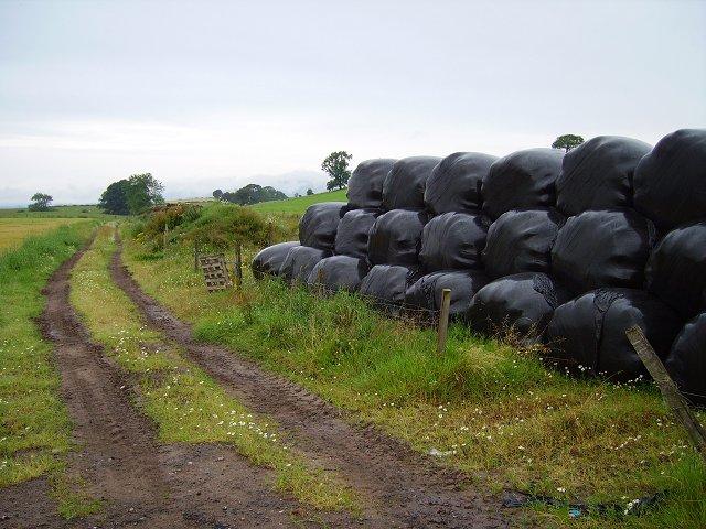 Round bales, Whirreston
