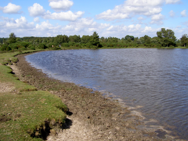 Whitten Pond at Whitten Bottom, New Forest