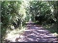 SP8230 : Salden Wood track by Mr Biz