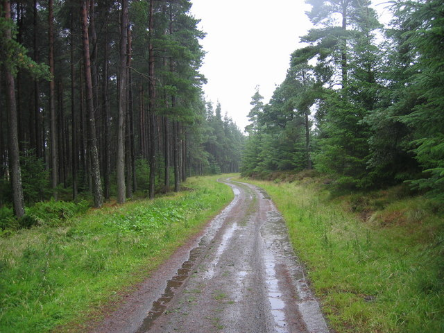 Forest Track Slaley Forest