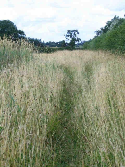 footpath near Old Hough