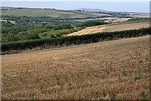 SW7952 : Woodland and Grain by Tony Atkin