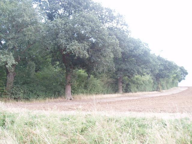 Edge of woodland