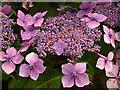 SX0588 : Tintagel Post Office Garden by Pam Brophy