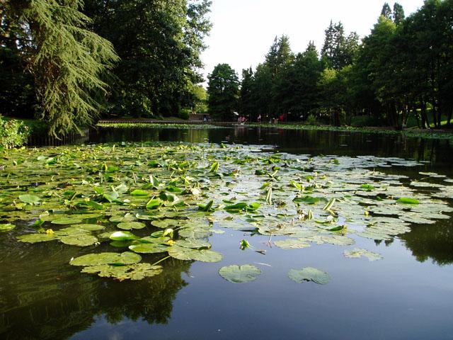 Lake at Stratford Park, Stroud