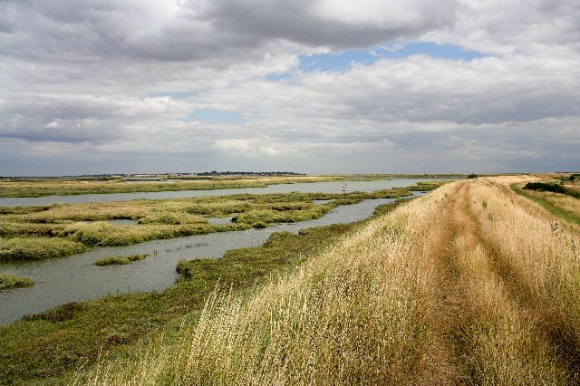 Salt Marsh in Salcott Creek/Blackwater Estuary