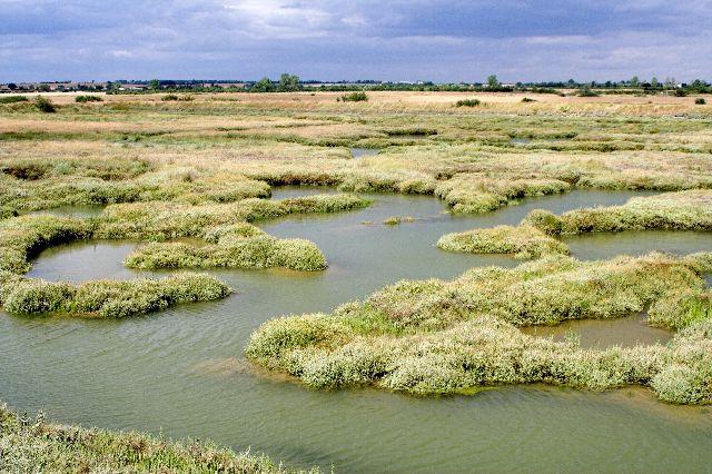 Salt marsh - Wikiwand