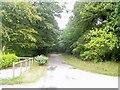 SN0605 : Lane through Cresselly Big Wood by Jennifer Luther Thomas