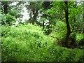 S7219 : JFK Arboretum by Richard Webb