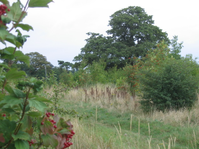 Crown Meadow Wood