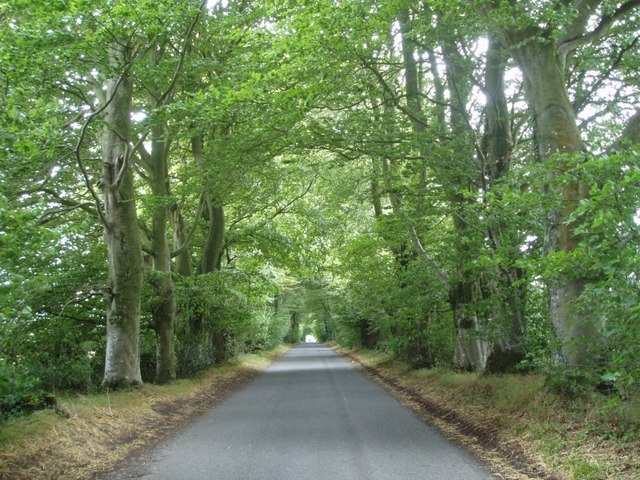 Beech lined road on Cranborne Chase