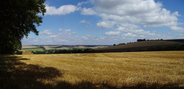 Summer scenery on Cranborne Chase