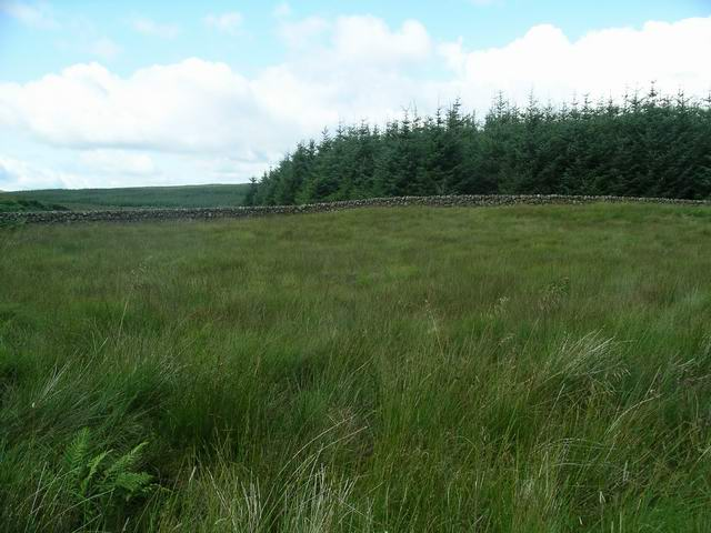 Grassland, wall and wood
