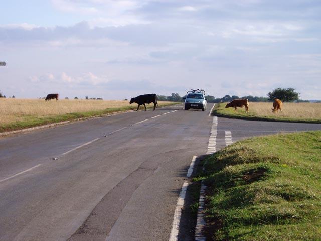 Hazards on the road