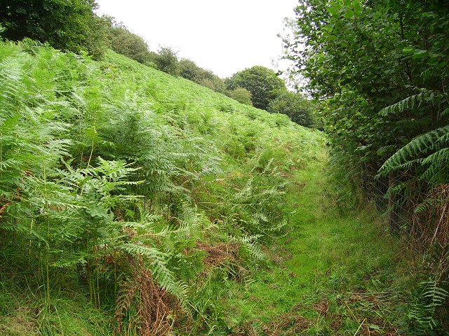Bracken, Beacon Hill